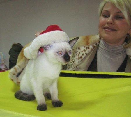 Международная выставка кошек «Карнавал-Мяу 2012» открылась в Новосибирске