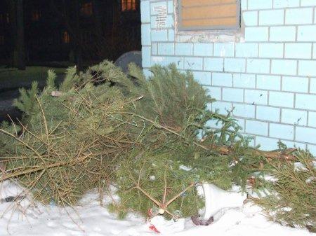Как утилизировать отслужившую новогоднюю елку?
