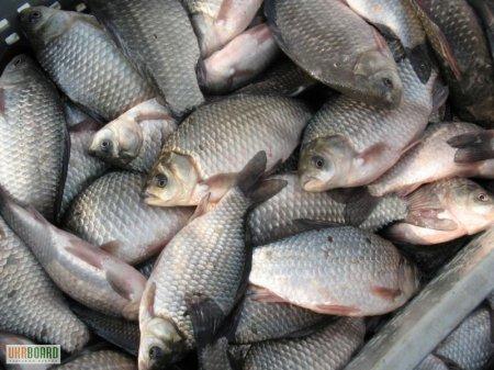 Рыбалка в озере Чаны