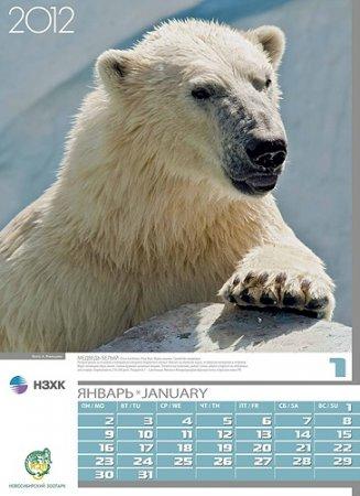 Животные новосибирского зоопарка снялись для календаря НЗХК