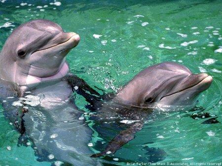 Строительство дельфинария столкнулось с протестом экологов