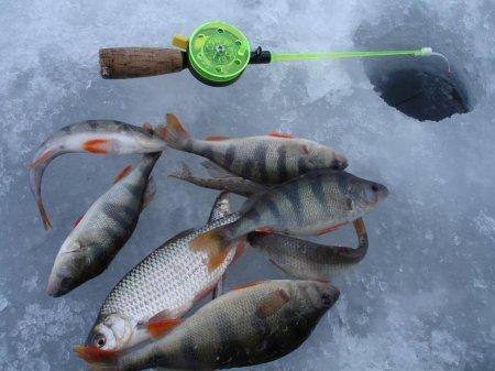 Рыбалка-2012: промышленная и любительская
