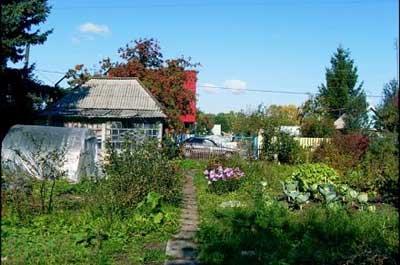 Прямая линия: как оформить дачный земельный участок в городской черте?