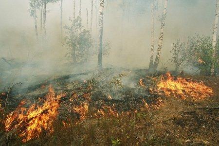 МЧС: «Лесные пожары в Новосибирской области начнутся на 10 дней раньше обычного»