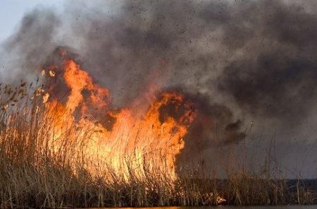 Прокуратура присоединилась к тушению пожара вдоль трассы «Байкал»