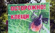 В Новосибирске клещи чаще нападают в Советском районе и Заельцовском парке