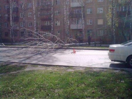 Береза упала на «Ладу» на ул. Новогодней