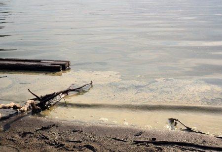 На пляжах Новосибирской области зацвела вода