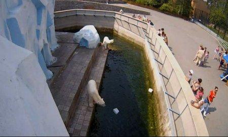 В вольере с белыми медведями заработала камера высокой четкости