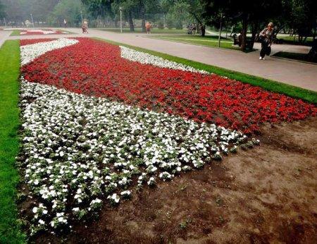 В Новосибирск возвращают бальзаминовые клумбы
