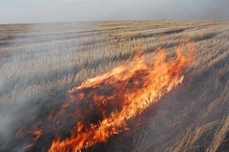 Засуха спалила зерно на корню
