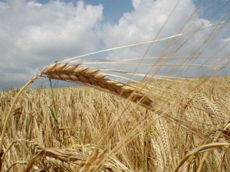 Из за засухи, наблюдается рост цен на хлеб