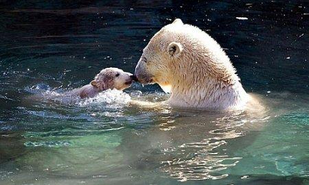 Новости зоопарка Новосибирска
