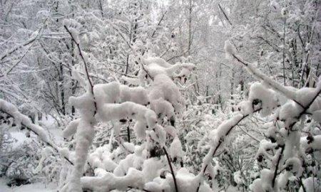 Новый год в Новосибирске будет снежным, но теплым
