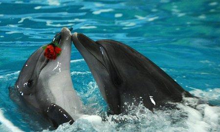 Строительство дельфинария начато