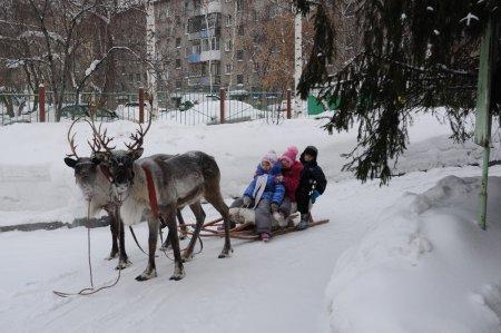Ветеринары вылечили новосибирского оленя