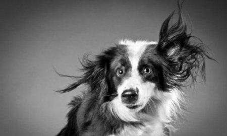 В Новосибирске появилось сообщество собак-фотомоделей