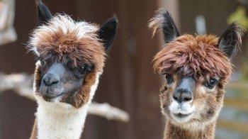 Новосибирский зоопарк пополнился новыми обитателями