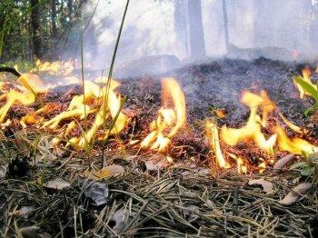 Более 60 жителей Новосибирской области оштрафованы за разведение костров